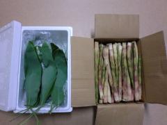 「笹餅」と「姫竹」